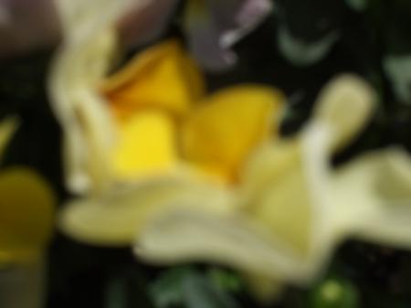 Flower No.1-2