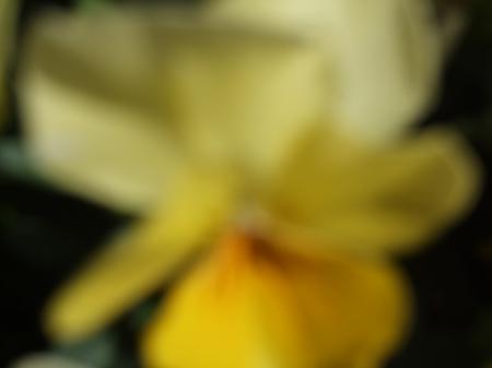 Flowers No.1-3