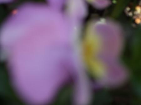 Flowers No.1-4
