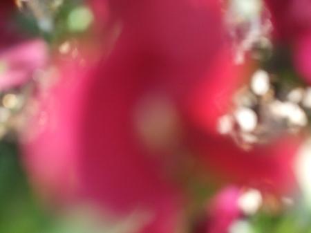 Flowers No.1-6