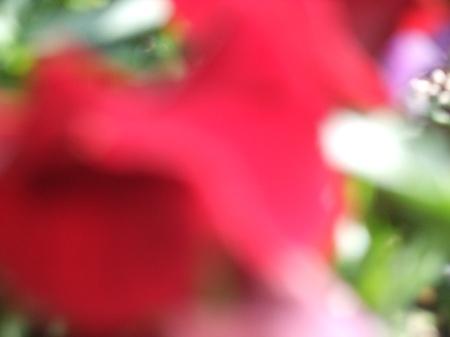 Flowers No.1-11