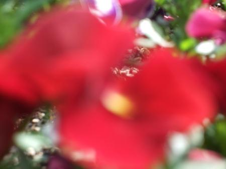 Flowers No.2-1