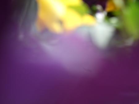 Flowers No.2-4