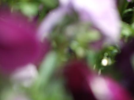 Flowers No.2-7