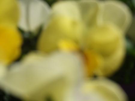 Flowers No.2-11