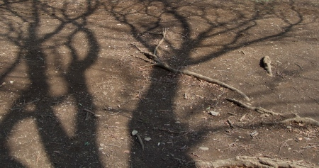 The shadows of the trees No.1-9