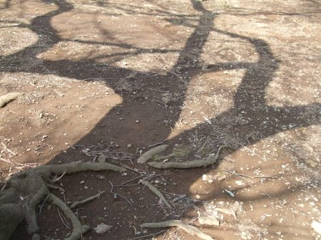 The shadows o fthe trees No.1-3