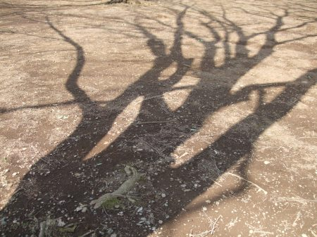 The shadows of the trees No.1-1