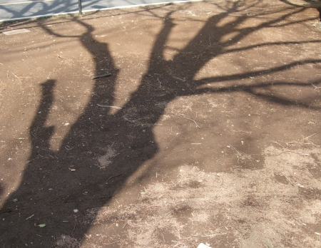 The shadows of the trees No.1-7