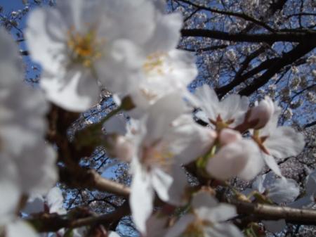 Flowers No.4-8