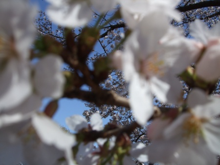 Flowers No.4-11