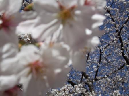 Flowers No.3-1
