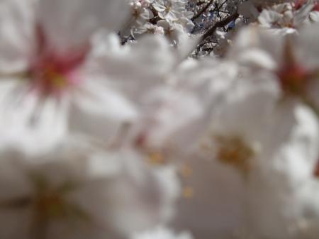 Flowers No.4-1