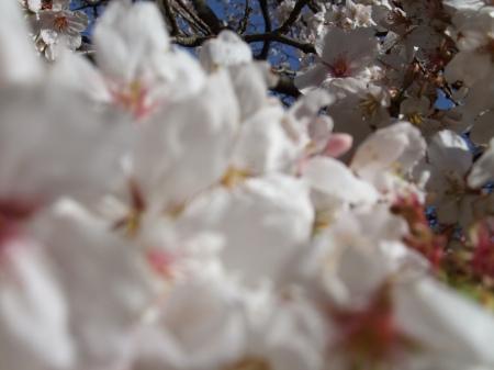 Flowers No.4-2