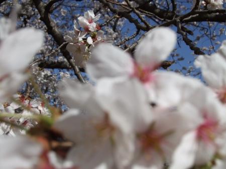 Flowers No.4-3