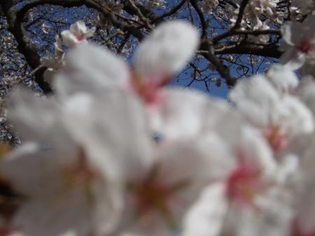 Flowers No.4-4