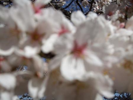 Flowers No.4-5