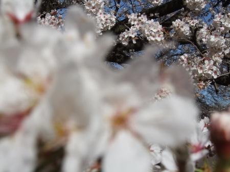 Flowers No.4-6