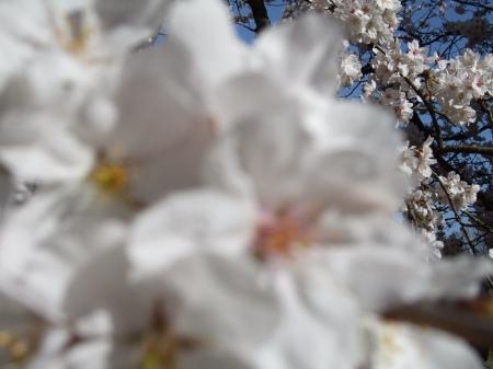 Flowers No.4-7