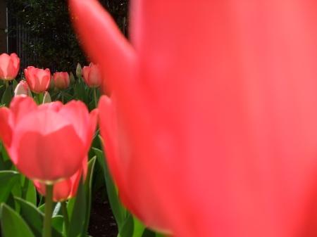 Flowers No.5-8