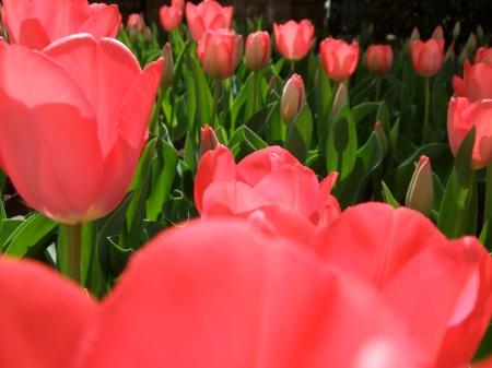 Flowers No.5-9