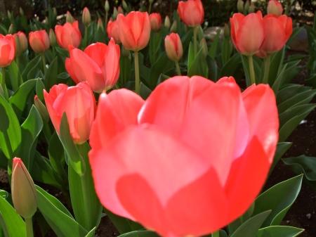 Flowers No.5-6