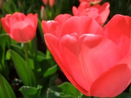 Flowers No.5-1