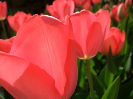 Flowers No.5-3