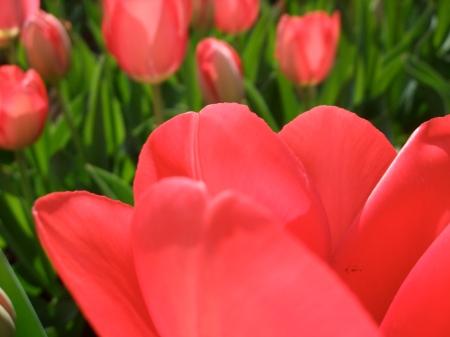 Flowers No.5-4