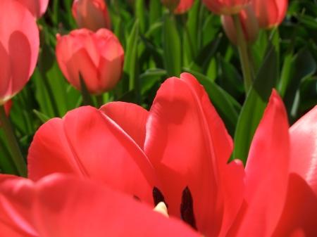 Flowers No.5-10