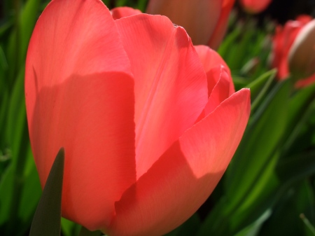 Flowers No.5-5
