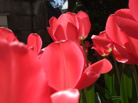 Flowers No.6-5
