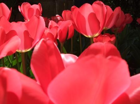 Flowers No.6-6