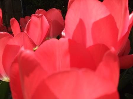 Flowers No.6-8
