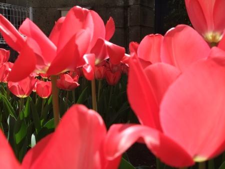 Flowers No.6-3