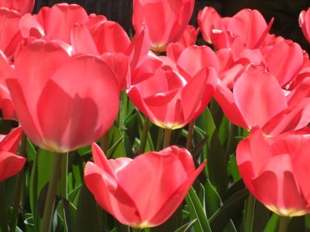 Flowers No.6-7
