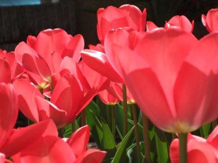 Flowers No.6-4