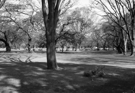 Parkscapes -5