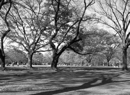 Parkscapes -3