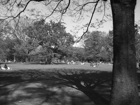 Parkscapes -1