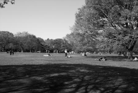 Parkscapes -2