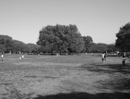 Parkscapes -7