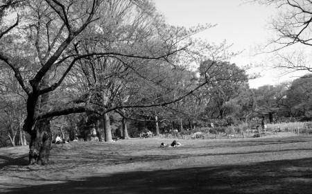 Parkscapes -8