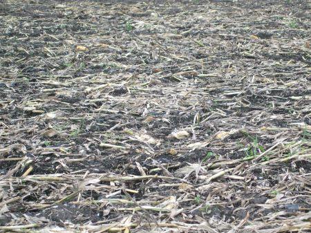 Cornfields No.1 -2