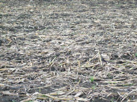 Cornfields No.1 -4
