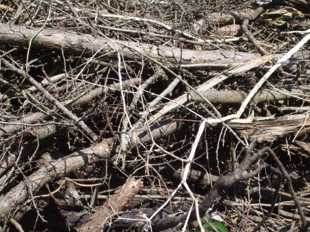 Deforestation No.1 -7