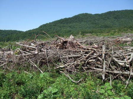 Deforestation No.1 -1