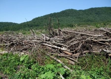 Deforestation No.1 -2