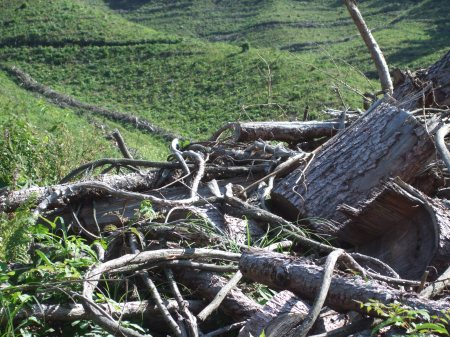Deforestation No.1 -9