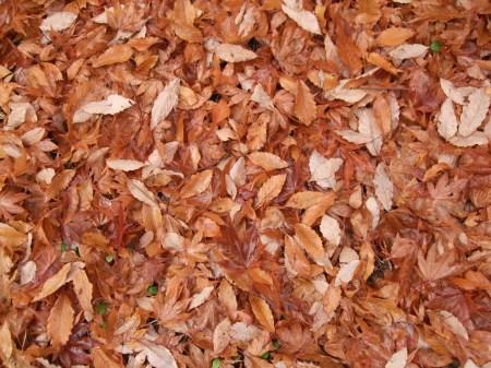 Fallen leaves No.2 -8